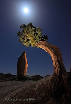Joshua Tree Leaning Juniper & Balanced Rock by Steve Sieren Photography, via Flickr
