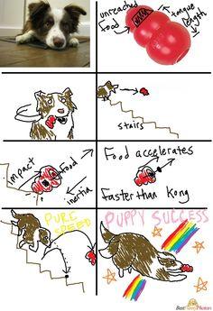 Funny genius dog Photo   Best Funny Photos