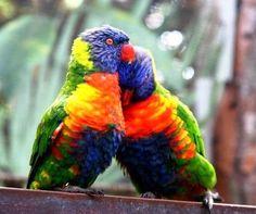 Aves exóticas del Amazonas y del Mundo.
