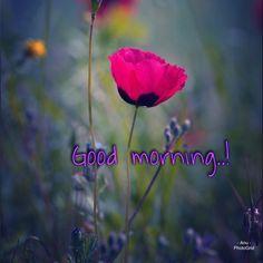 Good Morning Texts, Good Morning Good Night, Morning Wish, Good Morning Greeting Cards, Good Morning Greetings, Good Morning Flowers, Colorful Birds, Funny, Quotes