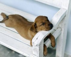 Relaxation at its finest. Cute.