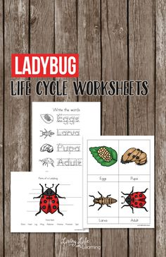 Explore your own backyard and learn more about ladybugs with this fun ladybug life cycle worksheets for kids, find out all about the parts of a ladybug too.  #science #scienceworksheets #homeschool #biology