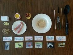 How are bird beaks adapted for different types of food? Set up a table of bird beaks and bird food and see for yourself!    The Scientific Mom: Birds Of A Feather