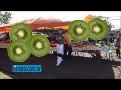 Dança do Kiwi e Acabou o Caqui - Maurinho Sancaxé - por Zmaro.com.br