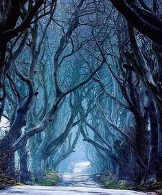 The Dark Hedges Ireland. Photo by @michelerossettiphotography...