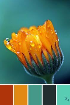 ZJ Colour Palette 434 #colourpalette #colourinspiration
