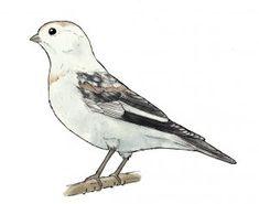 Pohjois-Suomen Kevätseurannassa seurataan yhdeksää pohjoiselle keväälle tyypillistä lajia. Bird, Animals, Animales, Animaux, Birds, Animal, Animais
