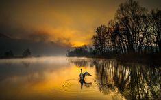 Descargar fondos de pantalla Río de Adda, Lombardía, Italia, la mañana, salida del sol, el bosque, el cisne, el Norte de Italia