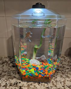 Best Pet to Get During Covid Quarantine ~ Froggy's Lair Easy to Care for African Dwarf Frogs #froggyslair | Bragging Mommy Planted Aquarium, Aquarium Fish, Fish Aquariums, African Frogs, Turtle Cage, Animal Party, Party Animals, Dwarf Frogs, Frog Tank