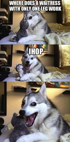 Funny Husky Meme Funny Husky Quote The post ap - Funny Dog Quotes - Funny Husky Meme Funny Husky Quote The post appeared first on Gag Dad. The post Funny Husky Meme Funny Husky Quote The post ap appeared first on Gag Dad. Husky Humor, Funny Husky Meme, Funny Dog Jokes, Dog Quotes Funny, Funny Relatable Memes, Hilarious, Pun Husky, Puppy Jokes, Quote Meme