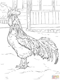 Brown Leghorn Rooster coloring page | SuperColoring.com