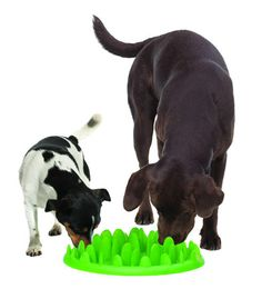 Pet Product Advisor for dogs that eat fast. I want to get one of these for daisy