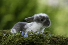 Pure - 50 Cute Bunny Pictures