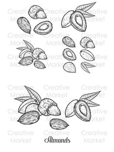 Isolated on white background. Engraved hand drawn almond illustration in retro vintage style. Almonds, Organic Recipes, Nutella, Hand Drawn, Retro Vintage, Spice, How To Draw Hands, Vintage Fashion, Herbs