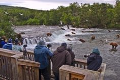 Alaska, Katmai National Park.  The observation deck is reached by hiking 1/2 mile from camp to the falls.