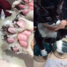 infected claws, declawed cat