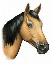 10+ idées de Tête de cheval | tête de cheval, cheval, tete de
