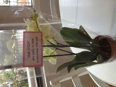 Classroom Volunteer gift - orchid