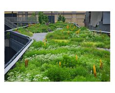 Plants of the Highline