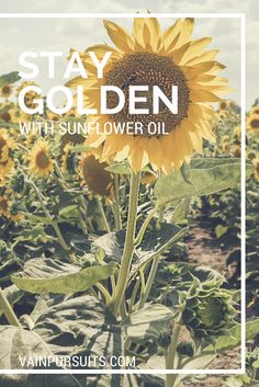For me, nothing says summer like a field full of sunflowers. When I first heard about sunflower oil as a skincare ingredient, however, I have to say I was a little surprised. See more on our blog #sunflower #skincare