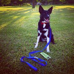Cute tuxedo dog.