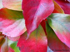 Colorful leaves by Snezana Petrovic on 500px
