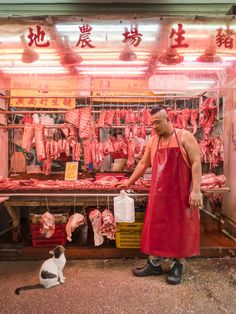Photographer reveals the secret lives of Hong Kong's market cats in captivating series Urban Photography, Film Photography, Street Photography, Travel Photography, White Photography, Landscape Photography, Nature Photography, Fashion Photography, Wedding Photography