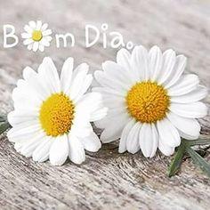 Instagram photo by franximenes_poesia -   ❝Porque tudo aquilo que nos traz paz é descomplicado, é simples, é leve, Nos faz feliz e faz sorrir e florir sempre o coração.❞ De : *Fran Ximenes*⁀⋱‿    @franximenes_poesia  #bomdia  #floriravida #florirocoraçao #paznaalma