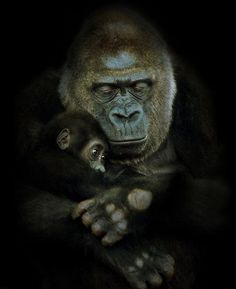 Beautiful and touching portrait of gorilla mother and child by Natalie Manuela. Click the link for more beautiful animal photos.