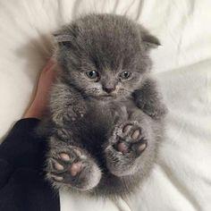 Top Ten Cat Pictures of The Week