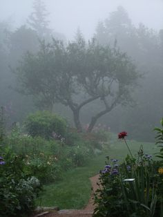 We do get some misty mornings here now and then. It would be wonderful to have a beautiful scene for the mist to creep over. I Love Rain, Nature Aesthetic, Rainy Days, Rainy Night, Aesthetic Pictures, Mists, Countryside, Nature Photography, Beautiful Places