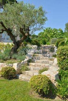 hillside gardens ~ gardens on a hill ; gardens on a hill sloped yard ; gardens on a hill hillside landscaping ; gardens on a hill ideas ; gardens on a hillside ; Forest Hills Gardens, Forest Garden, Hillside Garden, Terrace Garden, Mediterranean Garden Design, Landscaping A Slope, Sloped Yard, Nature Sauvage, Garden On A Hill