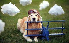 Pilot Dog Check more at http://hdwallpaperfx.com/pilot-dog/
