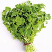 Herb Plant - Coriander