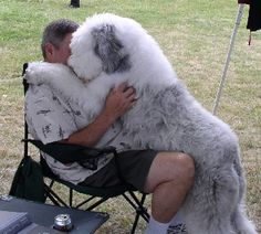 Makes me want to cuddle! OES (Old English Sheepdog)