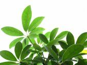 Guide to Houseplants - this website has an amazing amount of very good care suggestions.