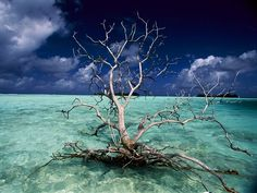 Petrified Tree, Palmyra Atoll   Photograph by Randy Olson, National Geographic  A petrified tree floats in the crystal-clear waters of the Palmyra Atoll in Polynesia's Line Islands.