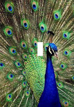 Beautiful Peacock bird light switch plate beautiful Animals wall art home decor gift made in the USA