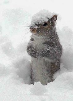 Squirrel in the Snow. Today as I looked out at the snow on my porch I saw him, a bunny! It was very similar to the squirrel pictured. It WAS a squirrel! I swear it was. Animals And Pets, Baby Animals, Funny Animals, Cute Animals, Wild Animals, Animals In Snow, Beautiful Creatures, Animals Beautiful, Tier Fotos