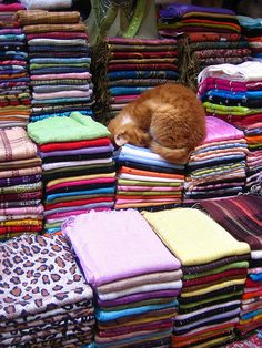 Fez, Morocco- so cats do this all across the globe. Lay on piles if clean clothes.