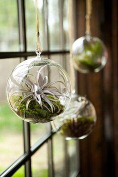 窓辺に揺れるハンギングテラリウム。苔のみずみずしい緑と、エアプランツの白っぽい色合いのコントラストが絶妙です。