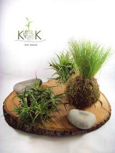 Kokedama Festuca - Kok Arte Natural