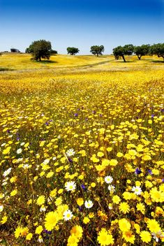Spring in Alentejo, Portugal