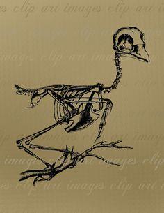 Bird Skeleton Clip Art, Royalty Free Image, Commercial Use, Digital Download Graphic, Design Element
