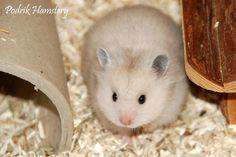 Podrik Hamstery