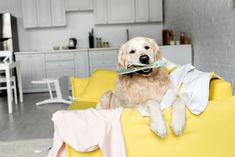Best Apartment Dogs By Breed Tips For Finding Dog Friendly Apartments That You Ll Be Happy In In 2020 Dog Friendly Apartments Dog Breeds By Size Best Apartment Dogs