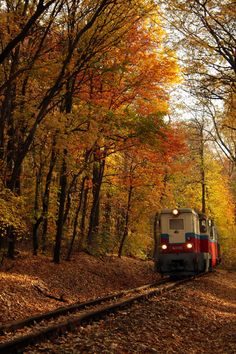 Long train rides in the middle of Autumn Photo Dream, Autumn Scenes, Autumn Aesthetic, Autumn Cozy, Mabon, Fall Pictures, Train Rides, Train Tracks, Autumn Inspiration