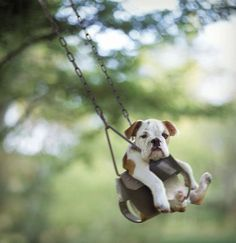 What's cuter than a clothed puppy? A puppy in a baby swing, that's what!