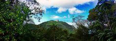Floresta - Selva - Museu do Açude - Alto da Boa Vista - Floresta da Tijuca - Rio de Janeiro - Brasil