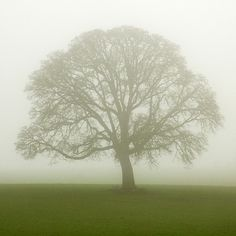 Lone Tree Photo The Solitary One Tree Art Green Nature by ndtphoto, $40.00